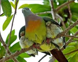 refuge-under-the-wing